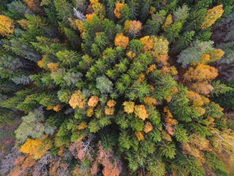 Вид с воздуха леса в осени стоковое фото rf