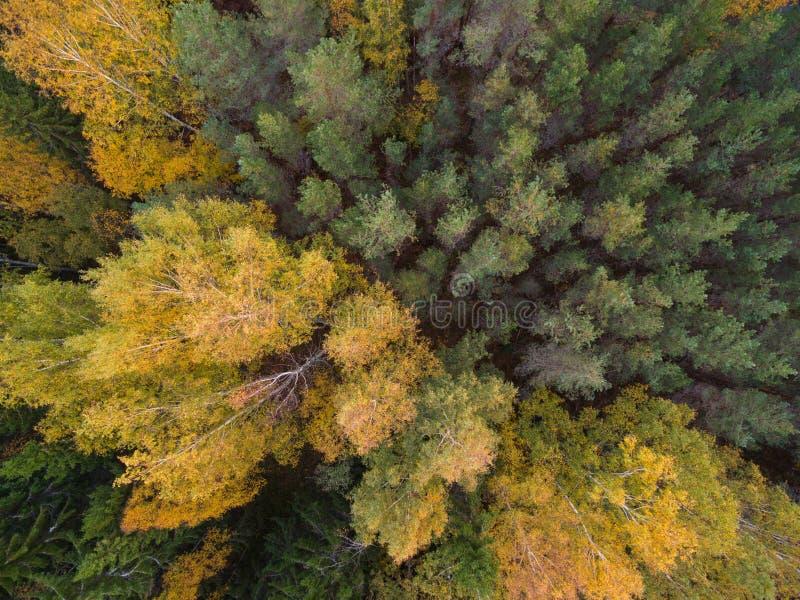 Вид с воздуха леса в осени стоковые фотографии rf