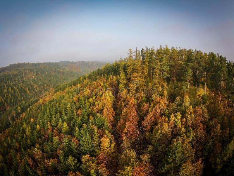 Вид с воздуха леса осени стоковое фото