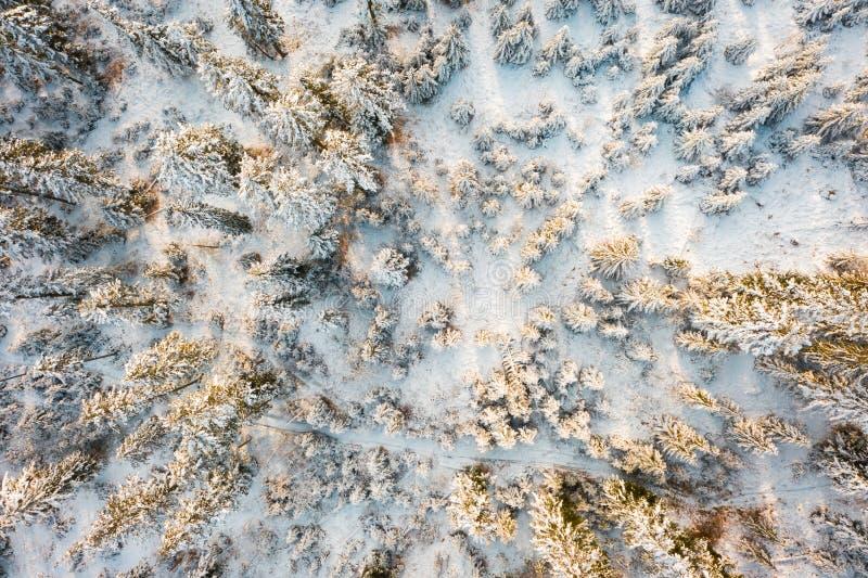 Вид с воздуха на взгляде сверху леса зимы на снежных елях в полесье зимы в солнечном свете стоковая фотография rf