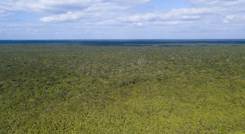 Вид с воздуха на необитаемые джунгли, расположенные во внутренних районах Козумеля, Мексика стоковое изображение rf