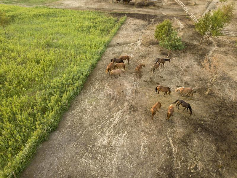 Вид с воздуха от сельскохозяйственных угодиь трутня с группой в составе лошади на прогулке на летний день стоковая фотография rf