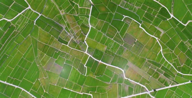 Вид с воздуха полей риса Chishang стоковые фотографии rf