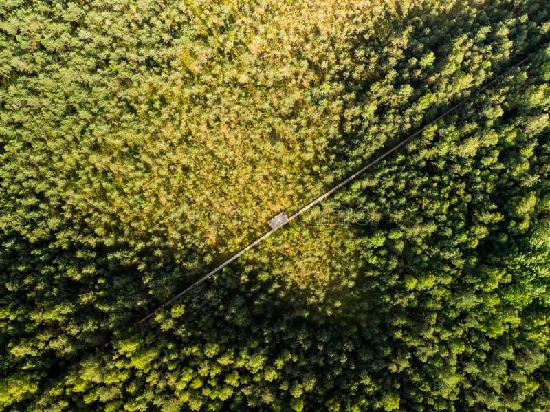 Вид с воздуха пути Varnikai когнитивного идя, водя через самые красивые места заповедника Varnikai, обнаруженные местонахождение  стоковые фото