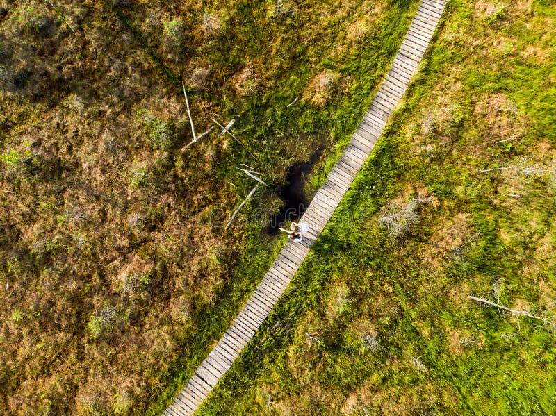 Вид с воздуха пути Varnikai когнитивного идя, водя через самые красивые места заповедника Varnikai, обнаруженные местонахождение  стоковое изображение