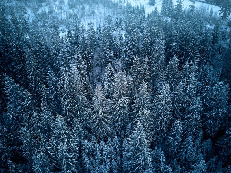 Вид с воздуха сверху леса зимы предусматриванного в снеге Сосна и елевый взгляд сверху леса Холодная снежная глушь стоковые фотографии rf