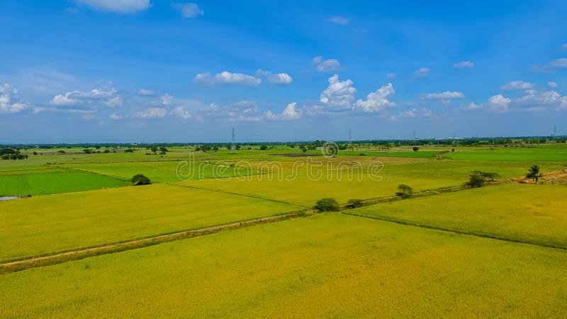 Вид с воздуха снятый от трутня красивых рисовых полей с зелеными молодыми ростками в обрабатывать землю органический сбор с рисом стоковые фото