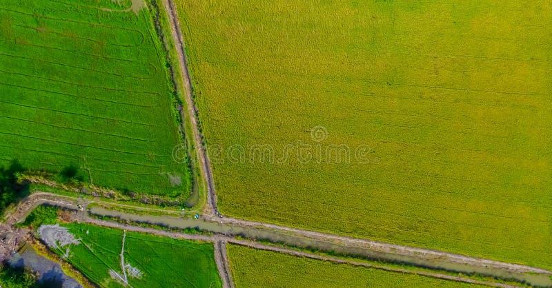 Вид с воздуха снятый от трутня красивых рисовых полей с зелеными молодыми ростками в обрабатывать землю органический сбор с рисом стоковая фотография