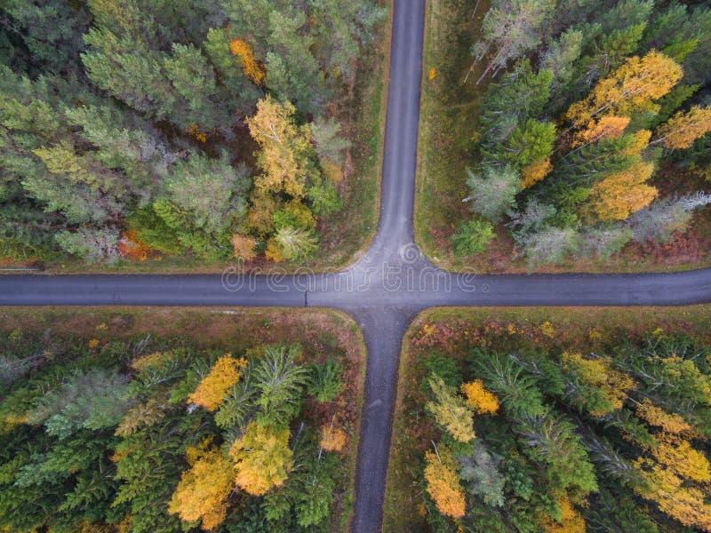 Вид с воздуха толстого леса в осени с вырезыванием дороги до конца стоковые фото
