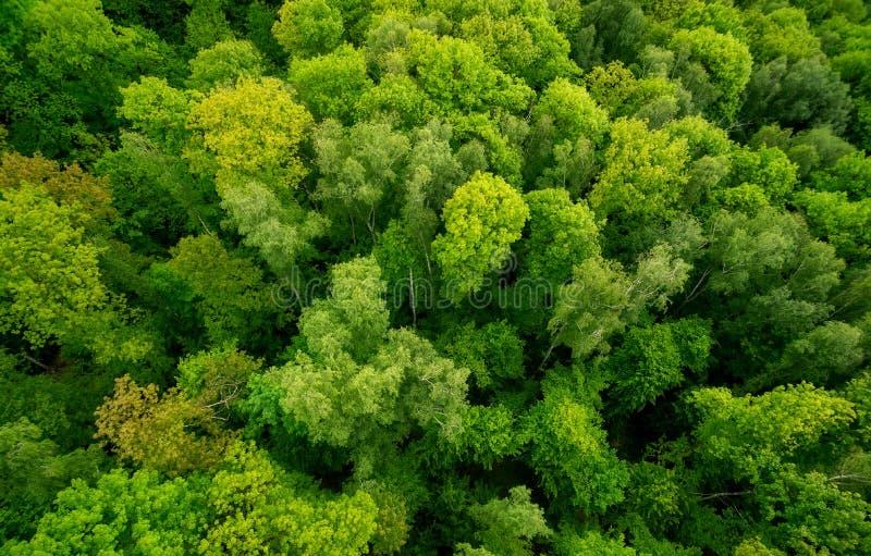 Вид с воздуха o лес стоковые фото