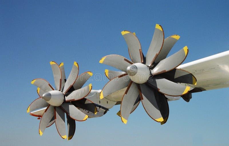 вид цветка что Стоковая Фотография RF