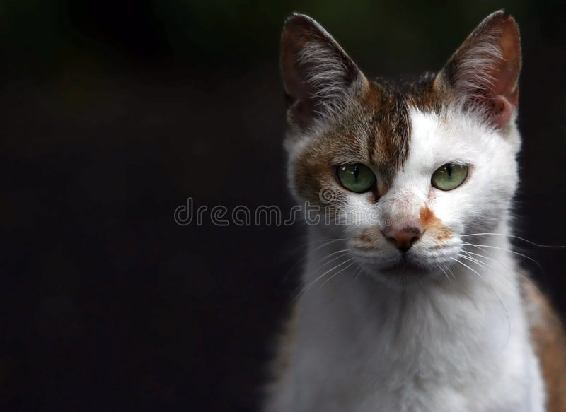 визирование кота s стоковые фотографии rf