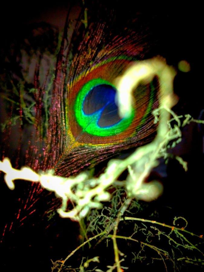 Визуальное освещение павлинов оперяется стоковая фотография rf