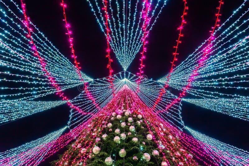 ВИЛЬНЮС, ЛИТВА - 3-ЬЕ ДЕКАБРЯ: Взгляд ночи самой красивой рождественской елки в Европе, съемке от дна стоковые фотографии rf