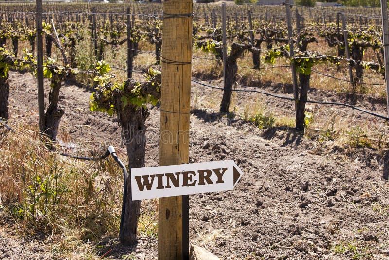 винзавод виноградника знака стоковые фото