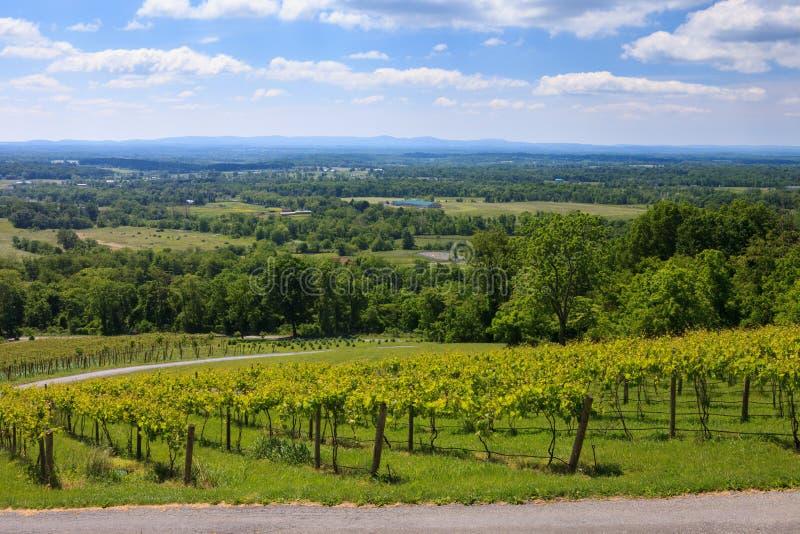 Винная страна Вирджинии стоковое фото