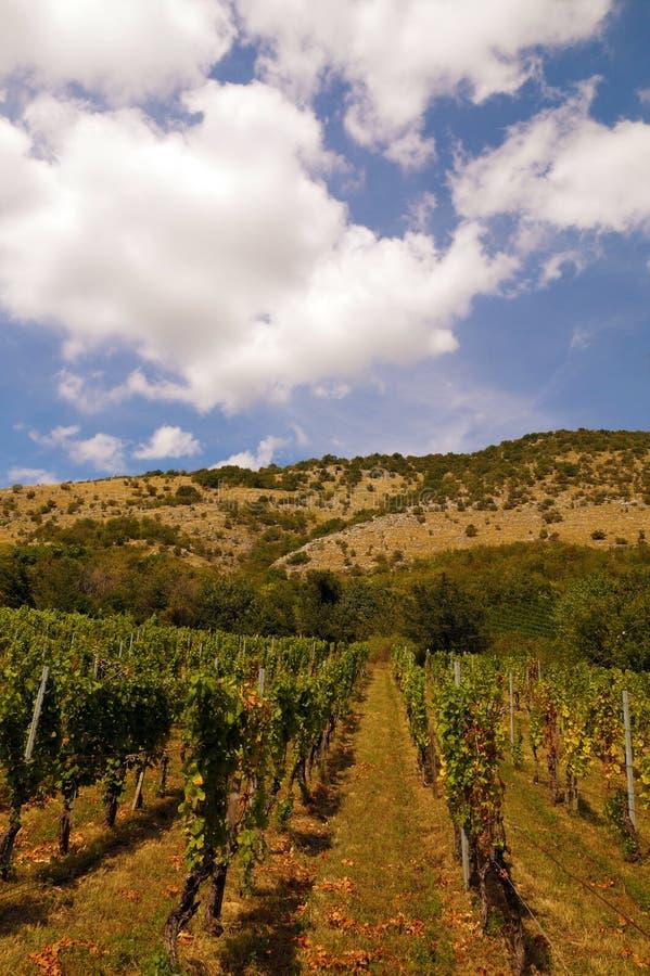 Винные изделия Красиво обнаруженные местонахождение виноградники на наклоне t стоковое изображение rf