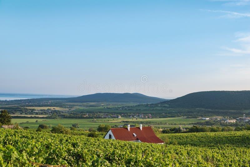 Винный погреб и виноградные лозы в винодельческом регионе Balaton, Венгрии стоковые изображения rf
