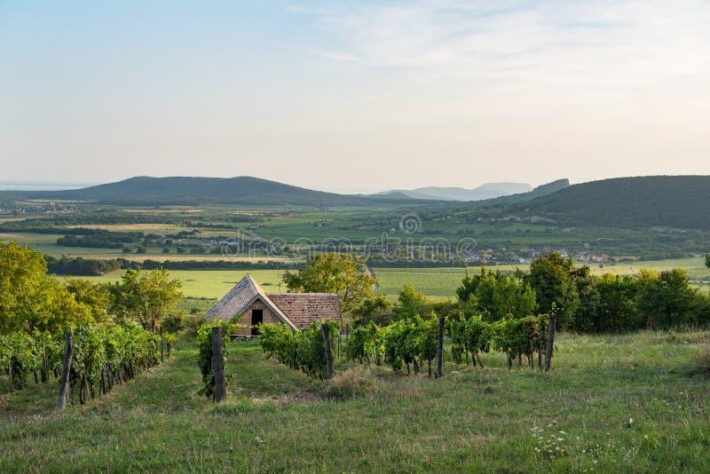Винный погреб и виноградные лозы в винодельческом регионе Balaton, Венгрии стоковые изображения
