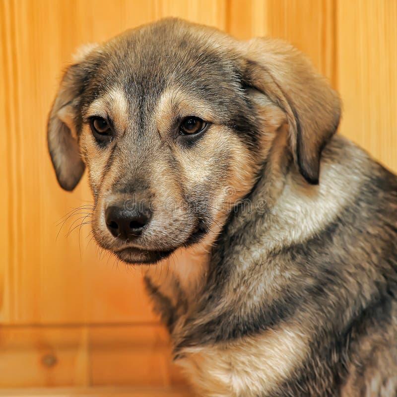 Виновный щенок стоковые фотографии rf