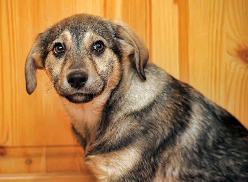 Виновный щенок стоковое фото rf