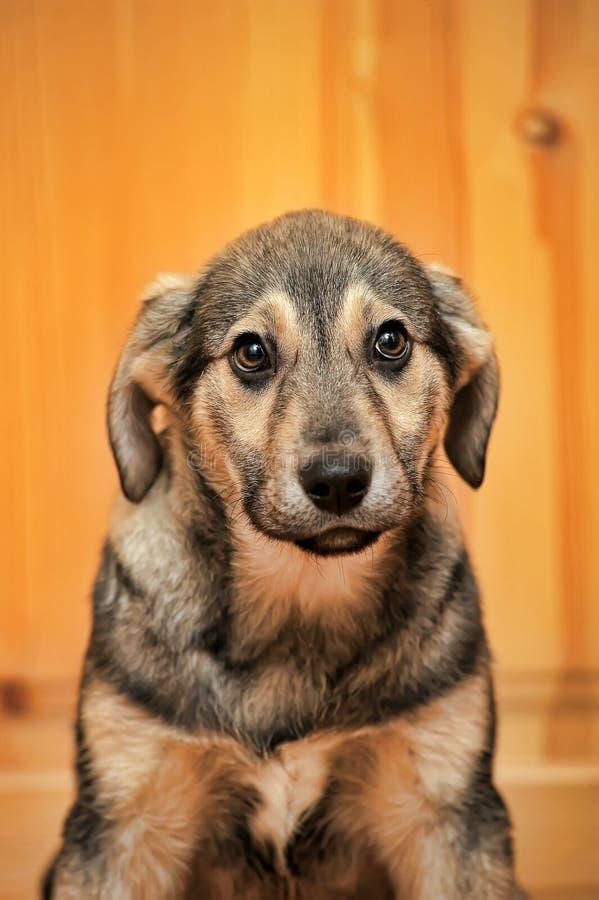 Виновный щенок стоковое изображение