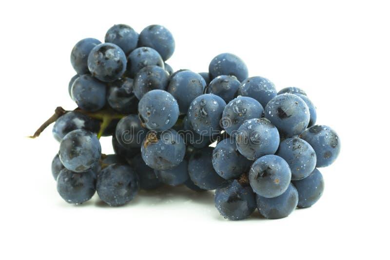 виноградина группы стоковые фотографии rf