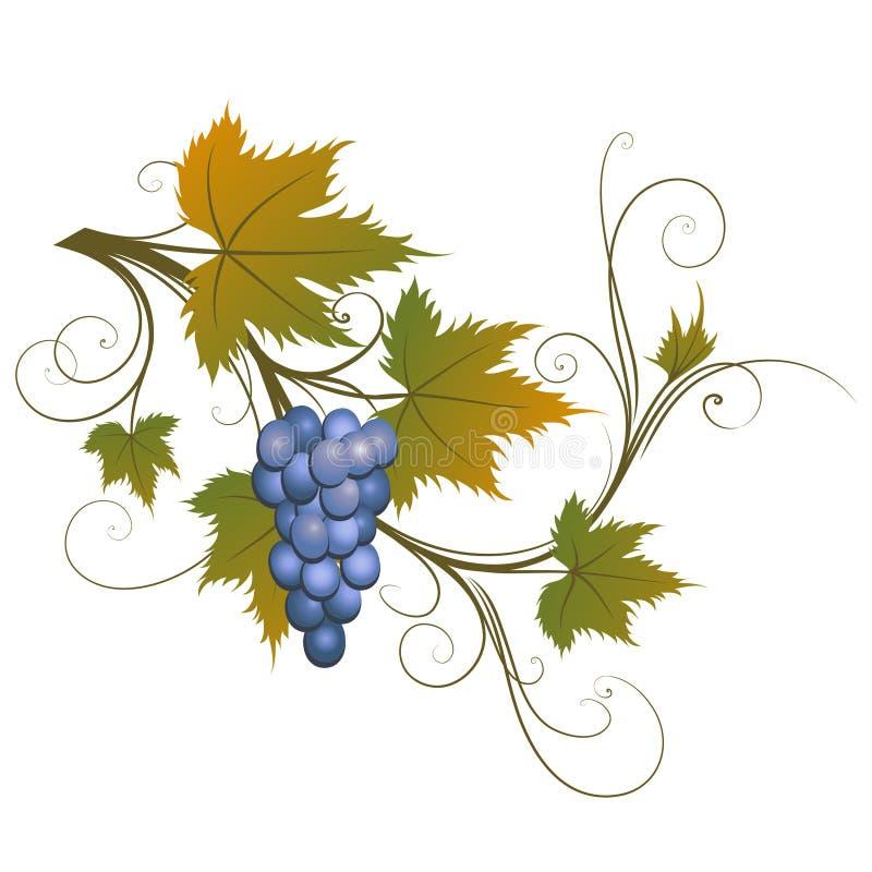 виноградина иллюстрация штока