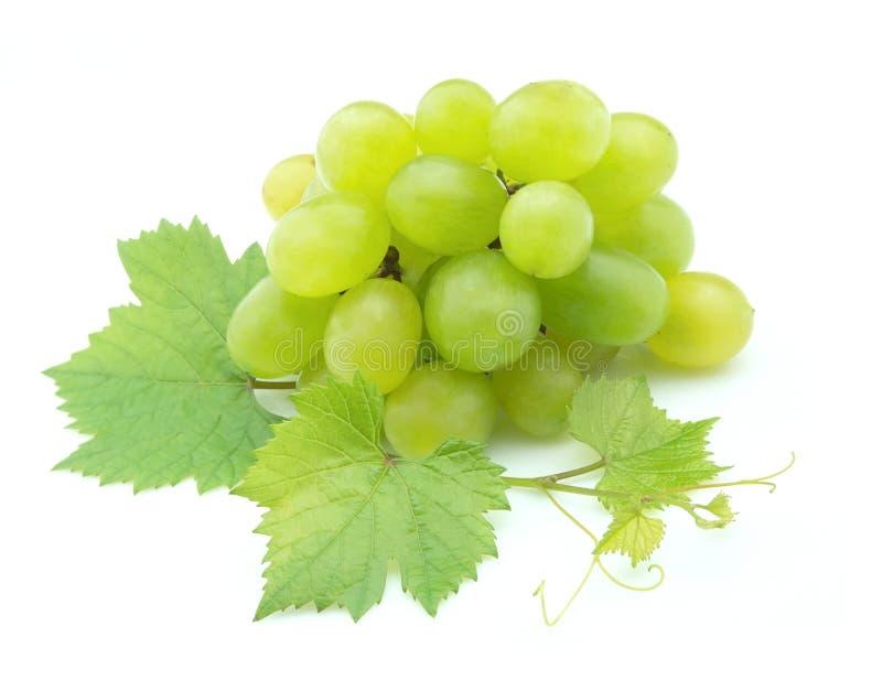 виноградины белые стоковая фотография