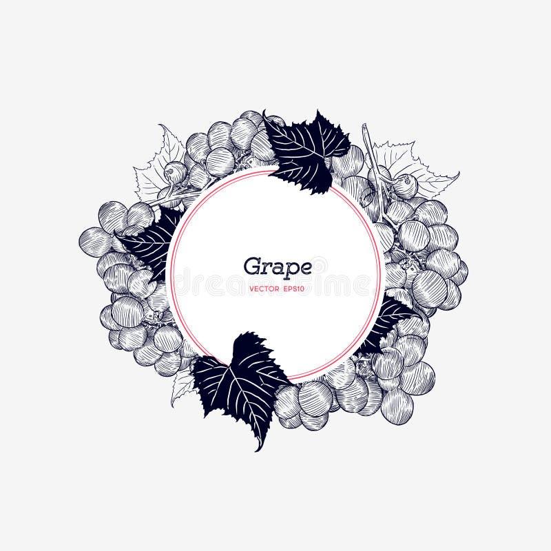 виноградины красные также вектор иллюстрации притяжки corel Стиль нарисованный рукой гравировки il бесплатная иллюстрация