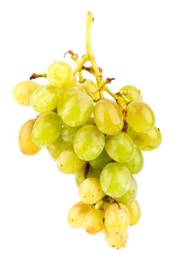 виноградины предпосылки изолировали белизну стоковое фото