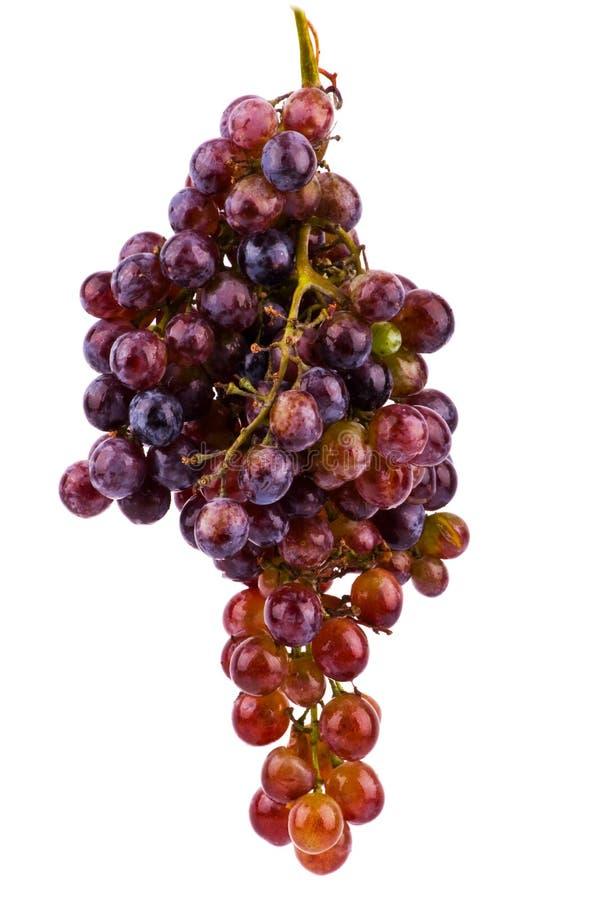 виноградины предпосылки изолировали белизну стоковое фото rf