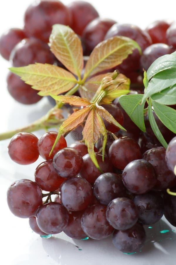 виноградины пука свежие стоковые фото