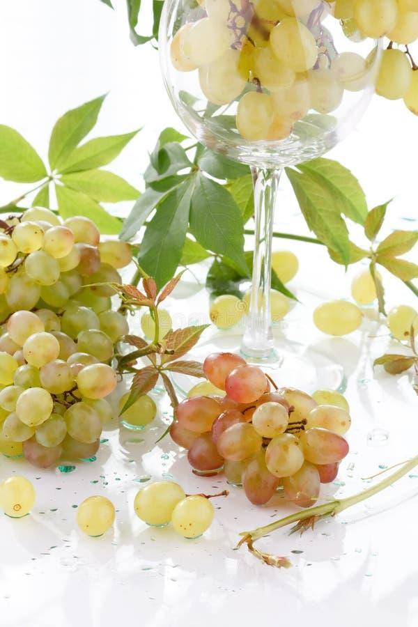 виноградины пука свежие стоковые изображения