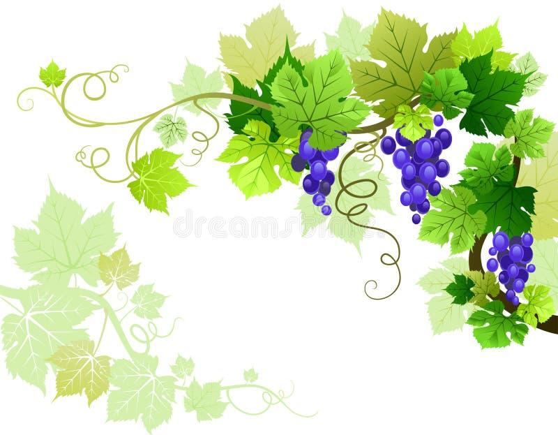 виноградины иллюстрация вектора