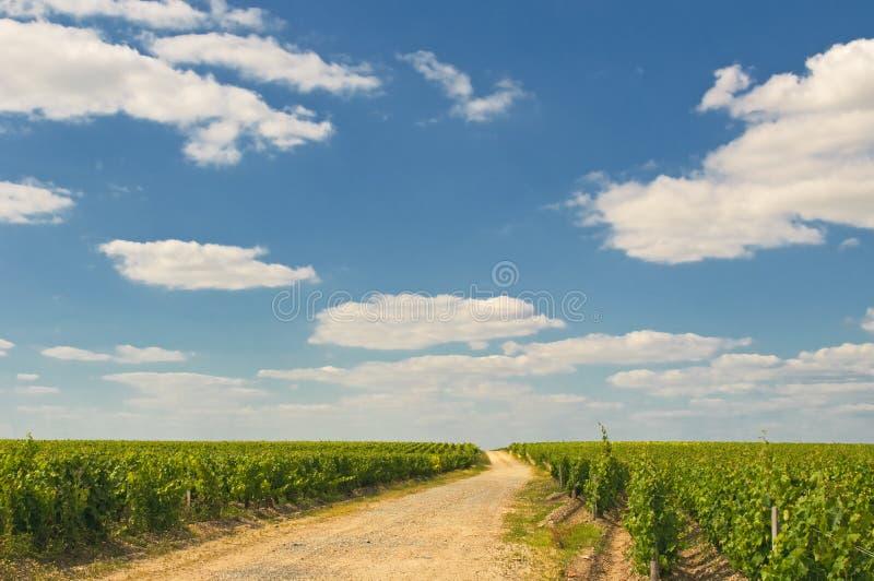 Виноградники в Бордо стоковые фото
