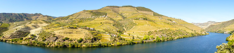 Виноградники в горе стоковые изображения