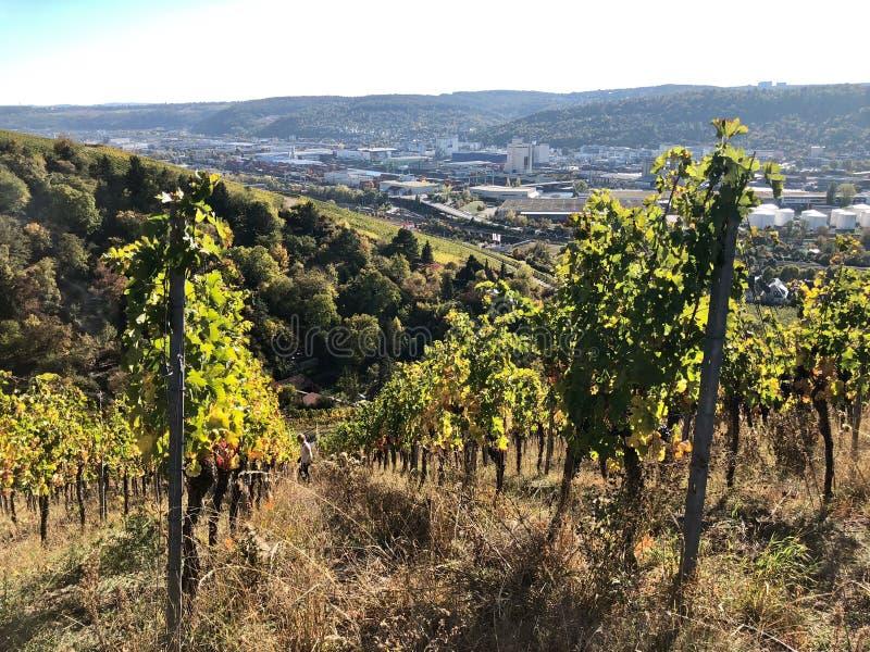 Виноградники в области Штутгарта стоковая фотография