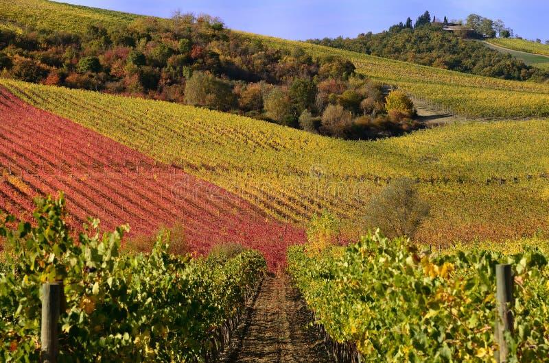 Виноградники в осени стоковая фотография rf