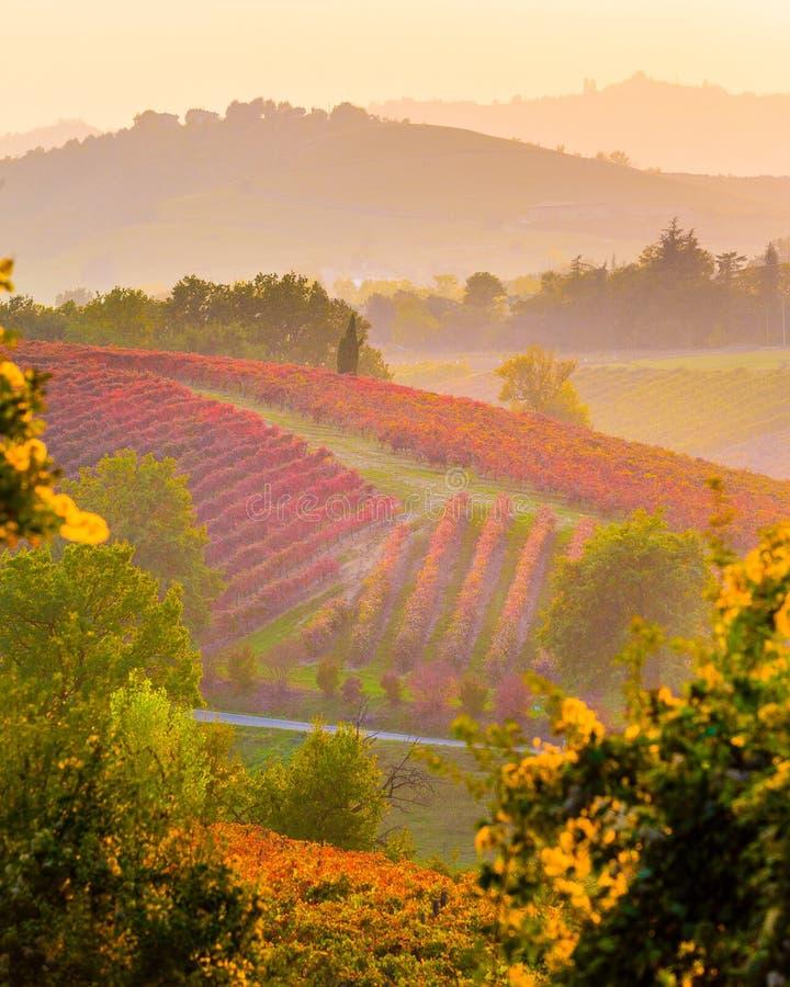 Виноградники в осени, di Модена Castelvetro стоковое фото