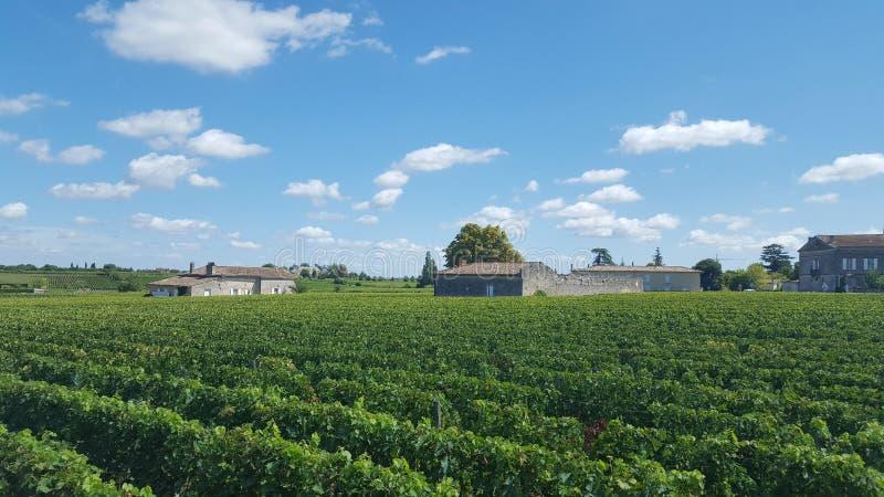 Виноградники в Святом Emilion стоковые фото