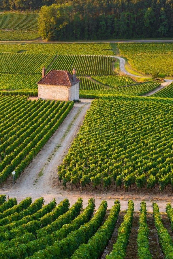 Виноградники в chambertin burgundy франция Gevrey стоковые изображения rf