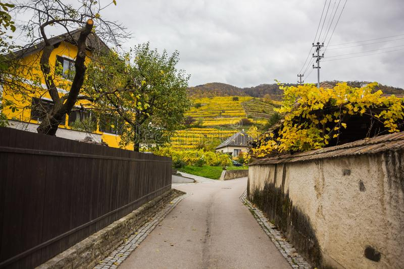 Виноградники в Wachau, шпице, Австрии стоковое фото