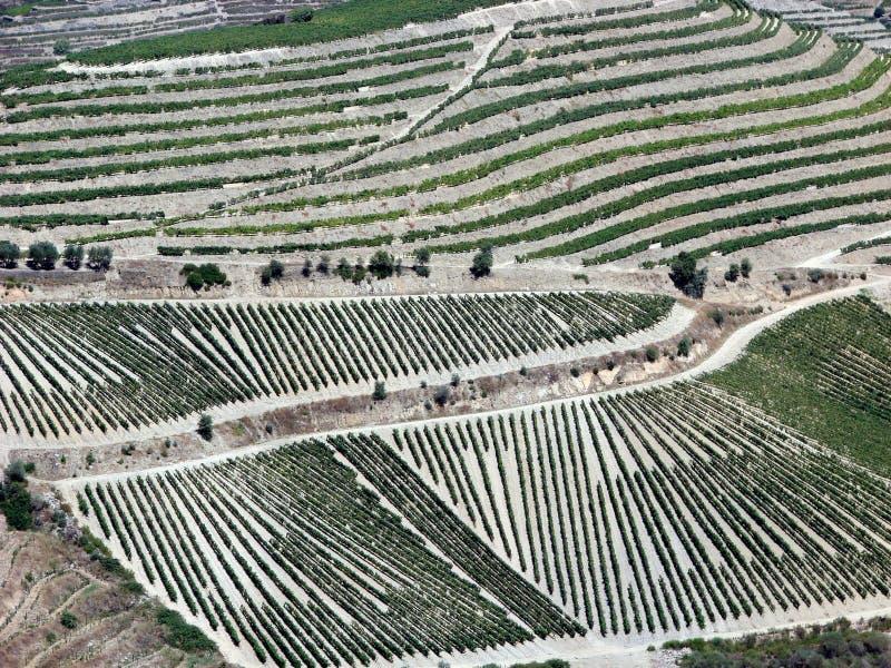 виноградники долины douro стоковое фото rf