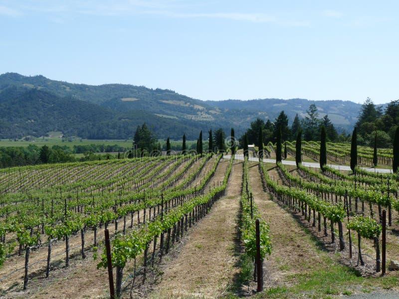 виноградники долины napa стоковое изображение rf