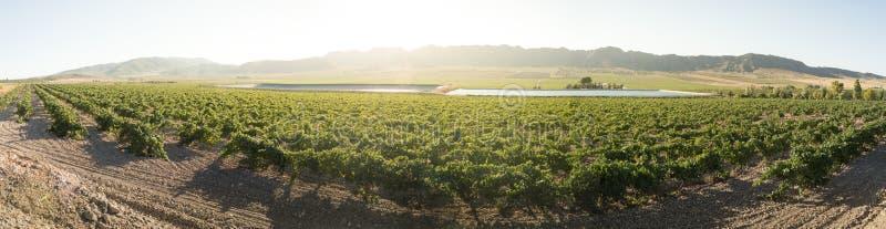 Виноградники и оросительный канал стоковое фото rf