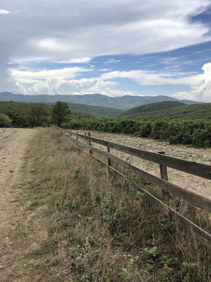 Виноградники, Кавказ, плантации, природа, небо, земледелие стоковое изображение