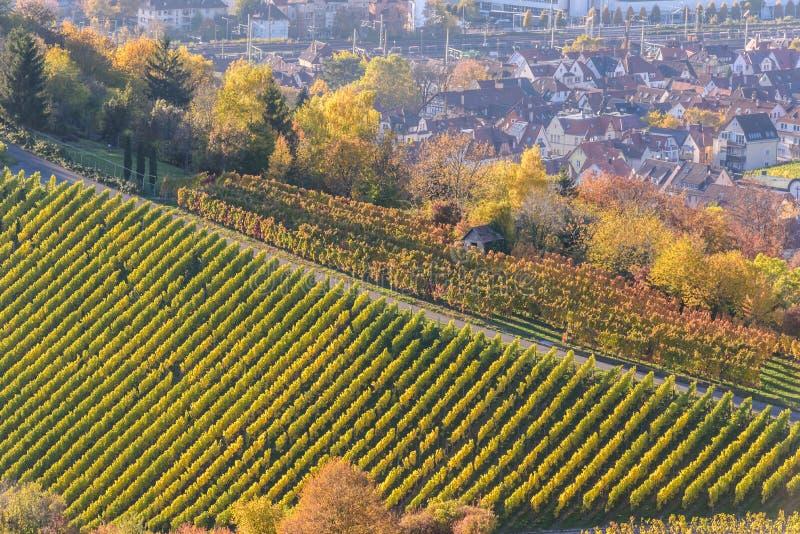 Виноградники на Штутгарте - красивом винодельческом регионе на юге Германии стоковые фотографии rf
