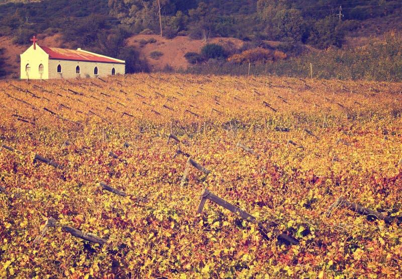 Виноградники осени с малой церковью стоковое изображение