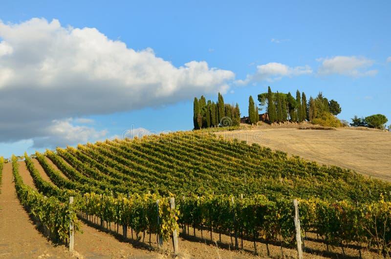 виноградники осени стоковые изображения rf